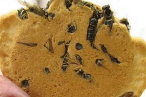 日本的十大奇葩食物,让你下不了嘴的黄蜂饼干【图】